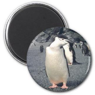 Waddle del pingüino de Chinstrap Imán Redondo 5 Cm