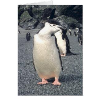 Waddle del pingüino de Chinstrap Tarjeta De Felicitación