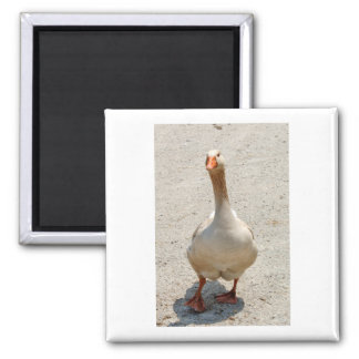 Waddling Goose Magnet