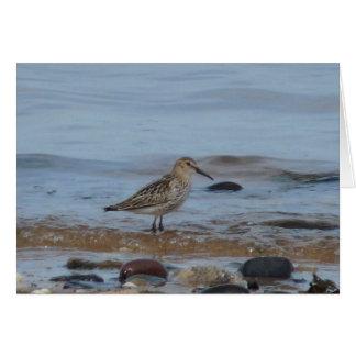 """Wading Bird Northumberland England Beach"" Card"