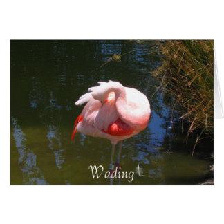 Wading Card