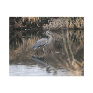 Wading Great Blue Heron Canvas Print