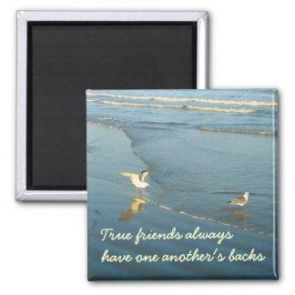 Wading Gull Friendship magnet
