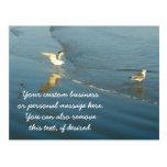 Wading Gulls Custom Postcard