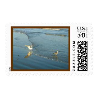 Wading Gulls Postage