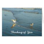 Wading Gulls Thinking of You Card
