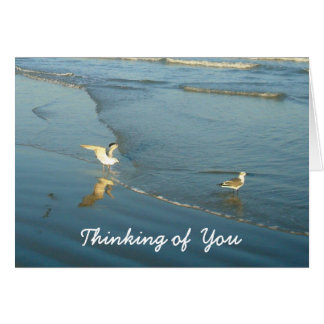 Wading Gulls Thinking of You Card