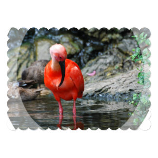 "Wading Ibis 5"" X 7"" Invitation Card"