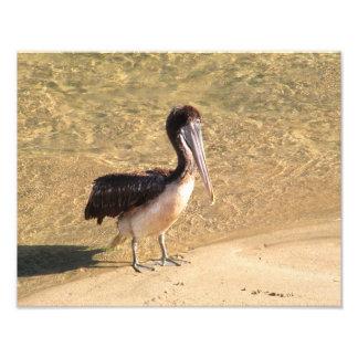 Wading Pelican Art Photo
