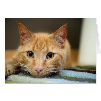 Waffles el gato de la terapia tarjeta de felicitación