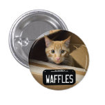 Waffles Kitty Button