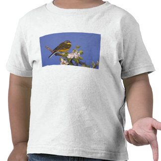 Wagtail amarillo, flava del Motacilla, varón en Camisetas