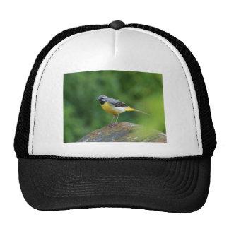 Wagtail gris - pájaro