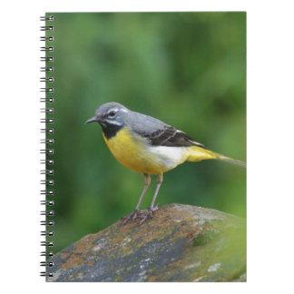 Wagtail gris - pájaro libreta