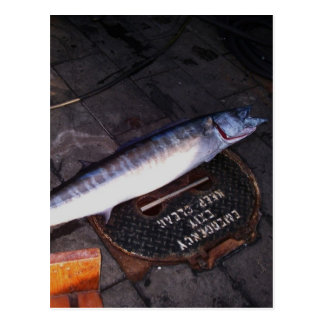 Wahoo Fish Postcard