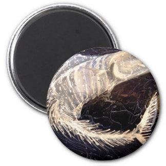 Wahoo.jpg 2 Inch Round Magnet