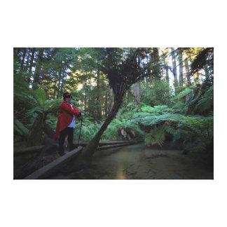 Waipa Forest w/ Ringmaster Canvas Print