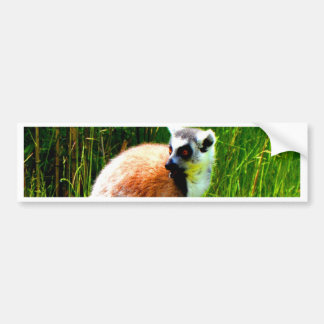 wait for love and joy ring tailed lemur prosimians bumper stickers