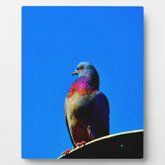 wait for love and peace  dove pigeon animal bird plaque