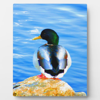 Wait for love peace and joy duck water bird photo plaques
