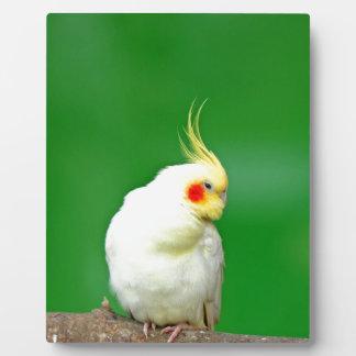 wait for love peace joy cockatiel bird parrot display plaque