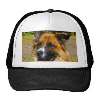 Wait for love peace joy  dog saint bernard trucker hat