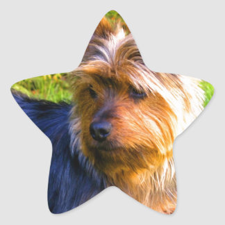 Wait for mom and love terrier star sticker