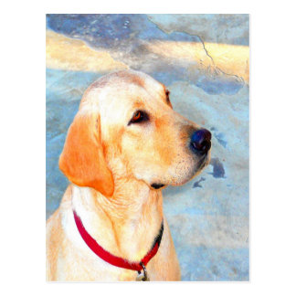 Wait for mom love joy labrador dog postcard
