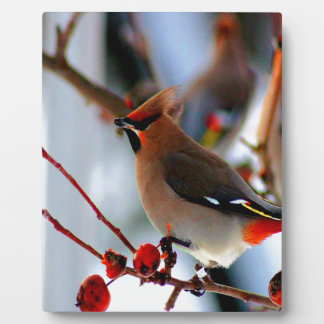wait for peace joy love bohemian waxwing bird display plaques