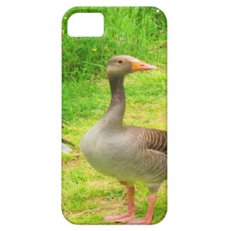 wait for you greylag goose anser wild animal bird iPhone 5/5S cases