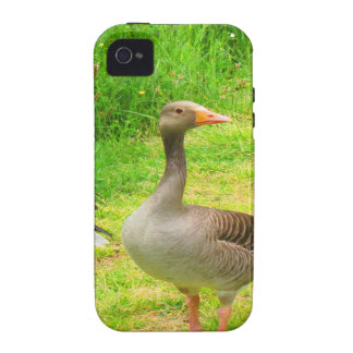 wait for you greylag goose anser wild animal bird iPhone 4/4S covers