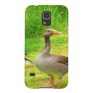 wait for you greylag goose anser wild animal bird galaxy nexus covers