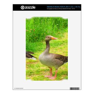 wait for you greylag goose anser wild animal bird NOOK skin