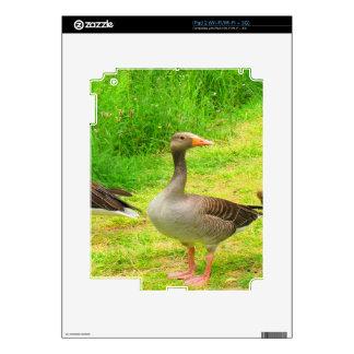 wait for you greylag goose anser wild animal bird iPad 2 decals