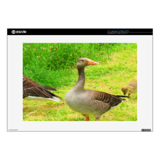 "wait for you greylag goose anser wild animal bird 15"" laptop skins"
