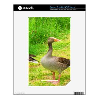wait for you greylag goose anser wild animal bird NOOK color decals