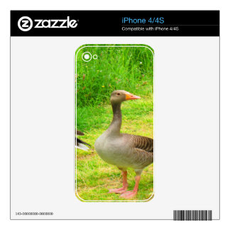 wait for you greylag goose anser wild animal bird decal for the iPhone 4