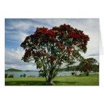 Waitangi, Christmas Tree, New Zealand flower Cards