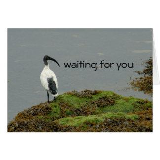 waiting bird greeting cards