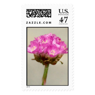 Waiting for it's lover, the bee. postage