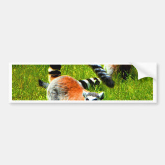 Waiting for my love ring tailed lemur prosimians bumper stickers