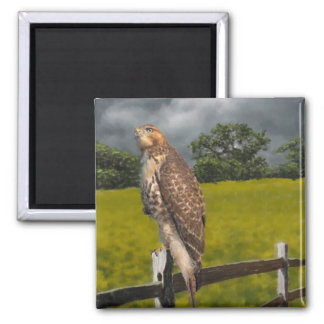 Waiting for the Storm - Red tail Hawk 2 Inch Square Magnet