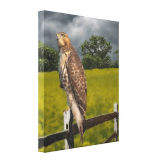 Waiting for the Storm - Red tail Hawk Canvas Print