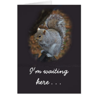 Waiting For You Eastern Gray Squirrel Card