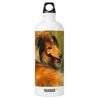 waiting for you rough collie aluminum water bottle