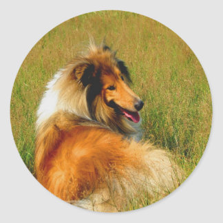 waiting for you rough collie classic round sticker