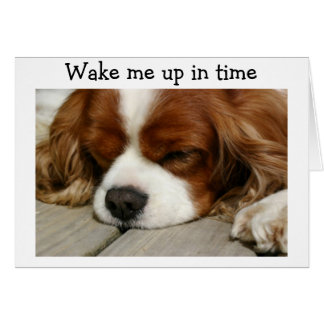 """WAKE ME UP IN TIME"" SAY SPANIEL BIRTHDAY GREETING CARD"