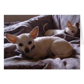 Wake Up Chihuahua Note Card