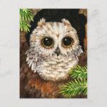 Wake Up, Little Owl - Cute Bird Art Postcard