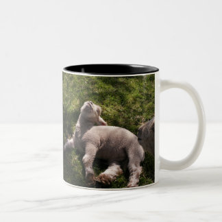 Wake Up Sleepyhead! Two-Tone Coffee Mug